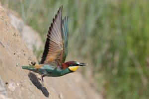 A la découverte des oiseaux de la Réserve naturelle
