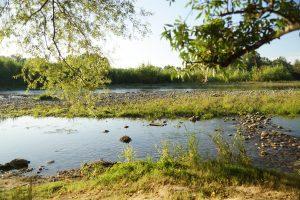 VisioConférence «Les zones humides de la Garonne : des réservoirs de biodiversité au service de tous !»
